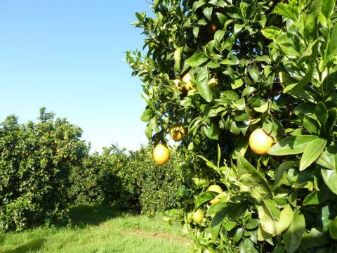 Agricultura Ecológica 04